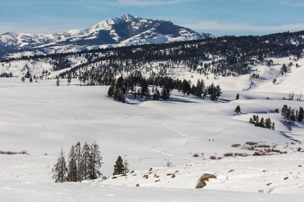 Winter in Yellowstone National Park - Best Season