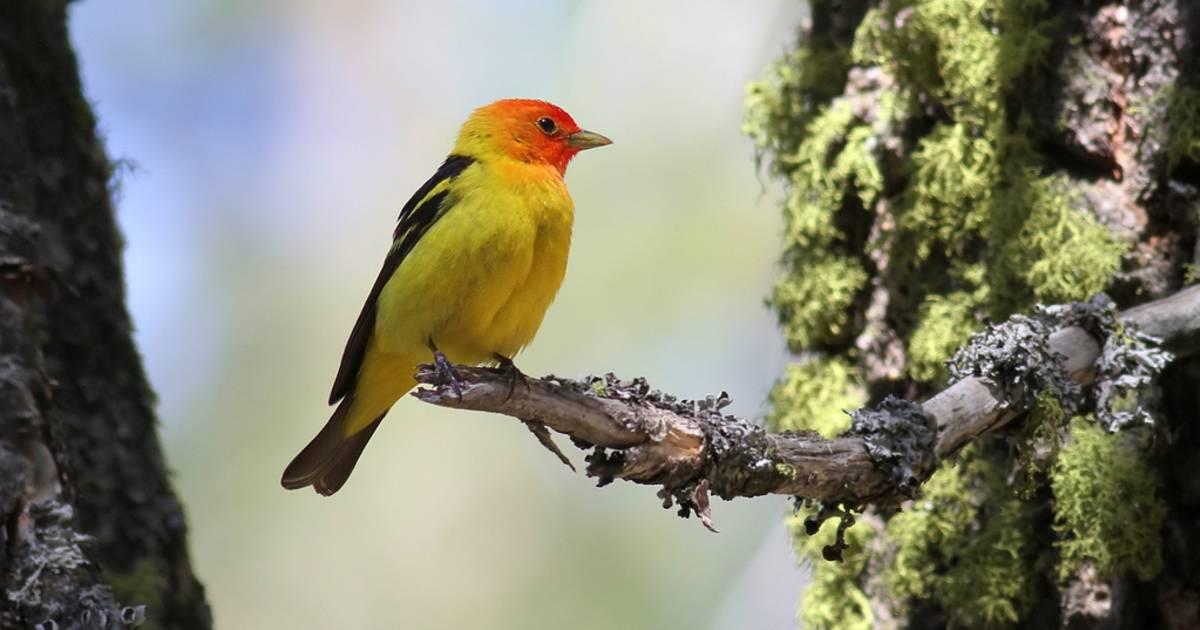 Birdwatching in Yosemite - Best Time