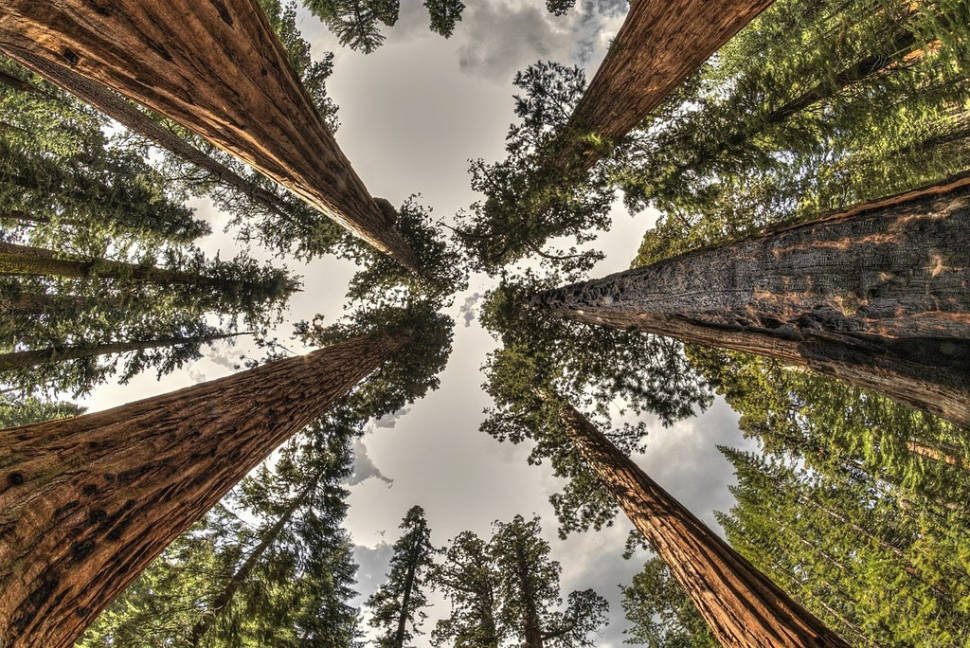 Best time for Giant Sequoias of Yosemite National Park in Yosemite