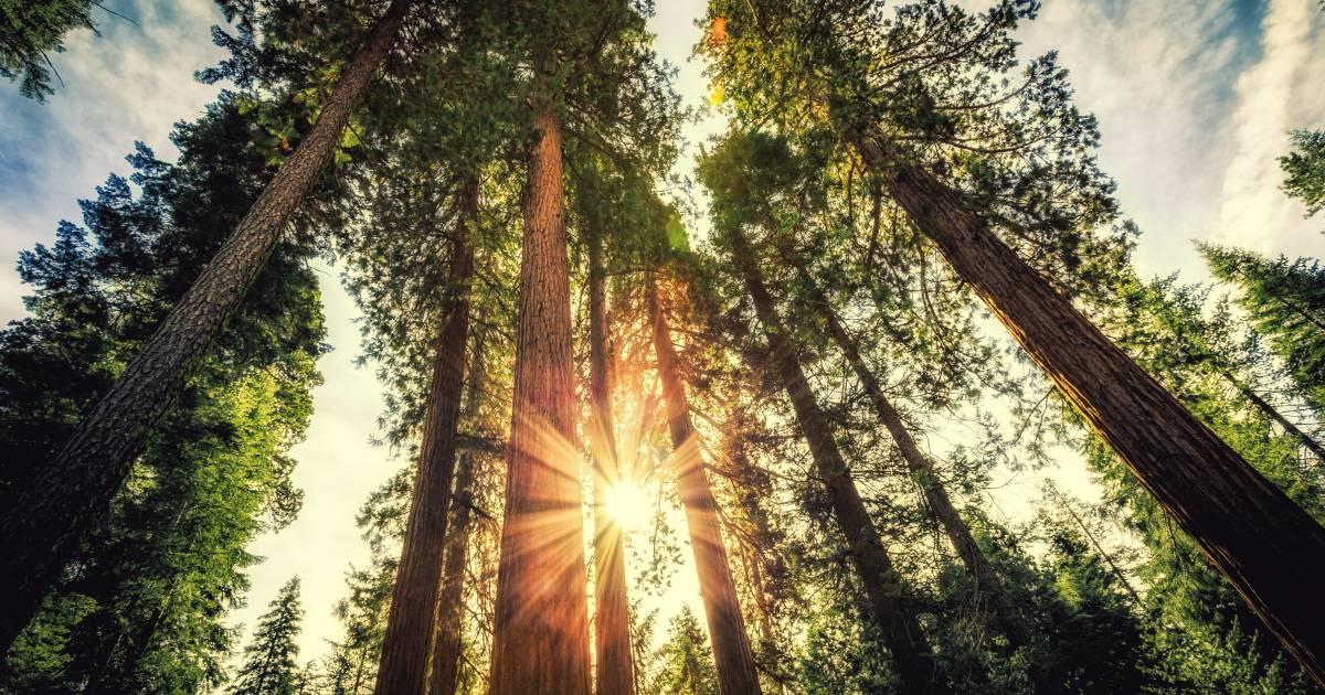Giant Sequoias of Yosemite National Park in Yosemite - Best Time