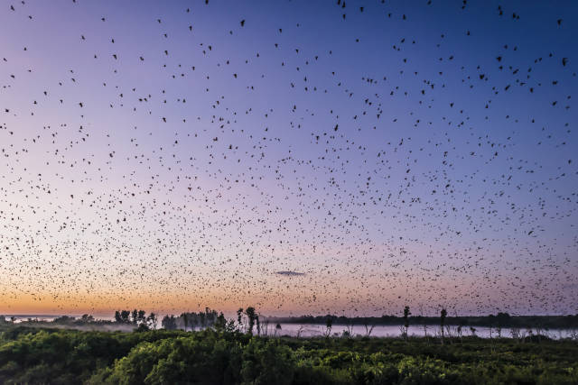 Best time for Bat Migration in Zambia