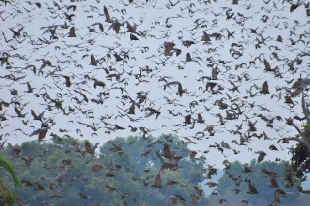 Best time to see Bat Migration in Zambia