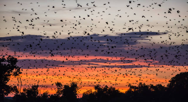 Bat Migration in Zambia - Best Time
