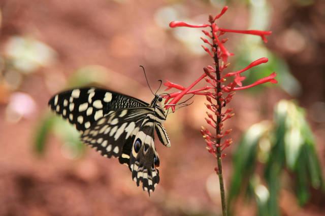 Butterflies in Zanzibar - Best Time
