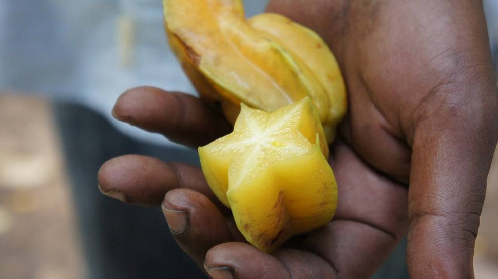 Carambola (Birimbi, Star Fruit) in Zanzibar - Best Time