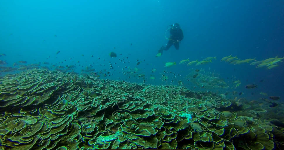 Diving and Snorkeling in Zanzibar - Best Time