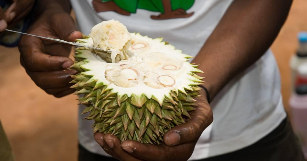 Durian in Zanzibar - Best Time