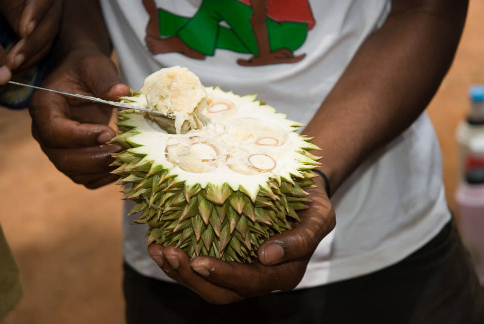 Durian in Zanzibar - Best Time