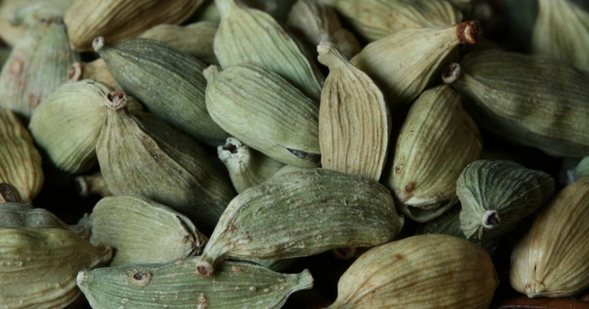 Green Cardamom Harvest in Zanzibar - Best Time