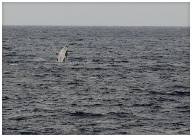 Humpback Whale Watching Season in Zanzibar - Best Time