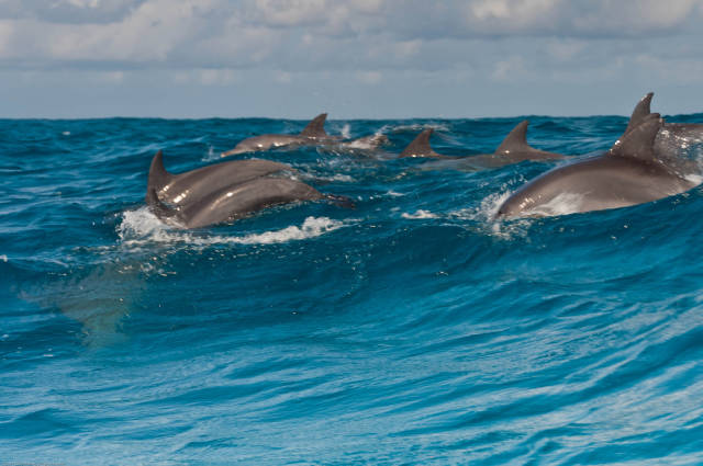 Swimming with Dolphins in Zanzibar - Best Time